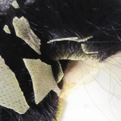 ひび割れた人工皮膚